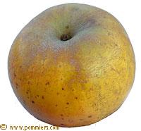 fruits oubliés st jean du gard